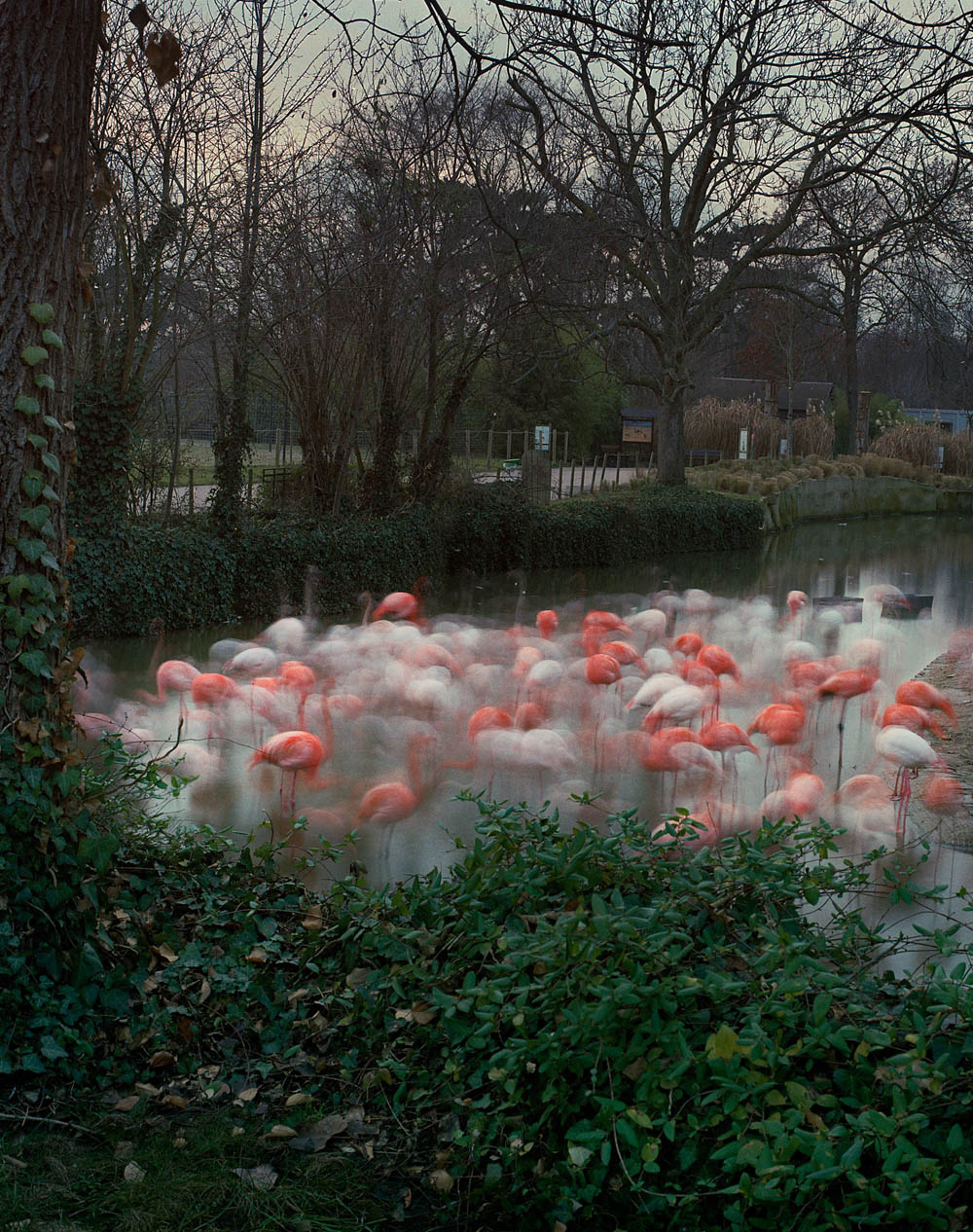 Flamingos Paris